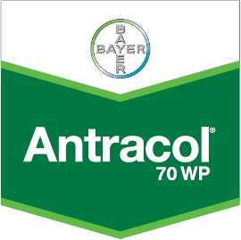 Antracol_70