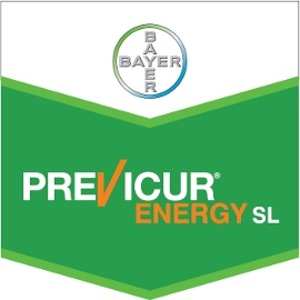Previcur_Energy